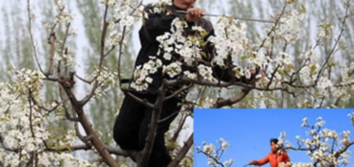 pollinis-2.jpg