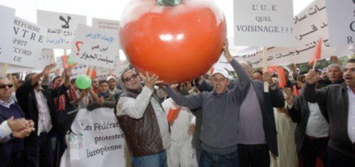 tomate-ue-maroc_05062014152414.jpg