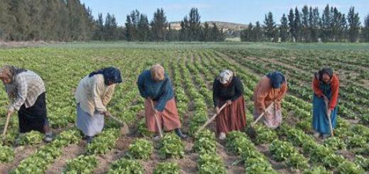 agriculture_tunisie.jpg