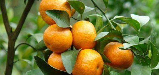 a026619272ef64 Vue d'ensemble sur le marché mondial des oranges - HortitecNews