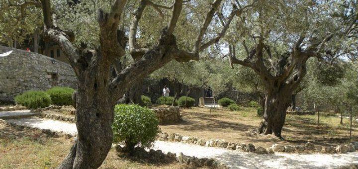 oliviers.jpg
