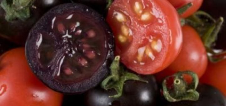 purple-tomato.jpg