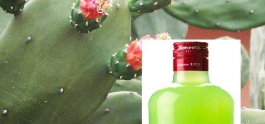 jus_de_cactus.jpg