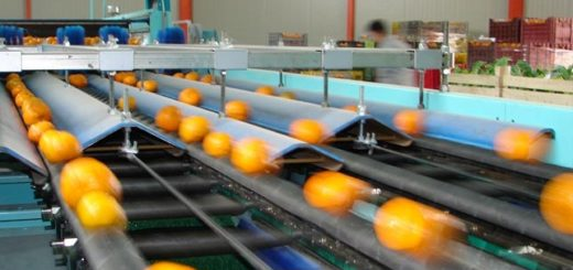 mandarine.jpg