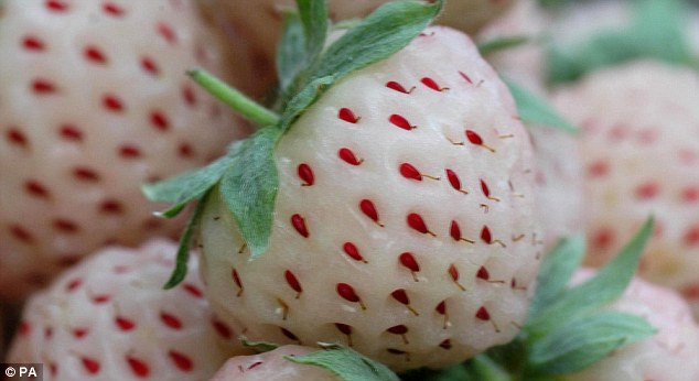pineberry.jpg