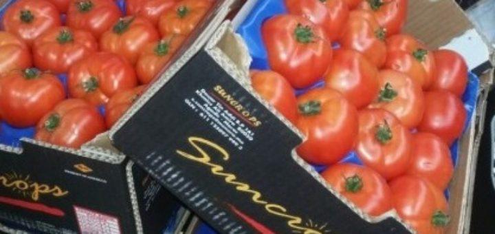 tomate_suncrops_sitca.jpg