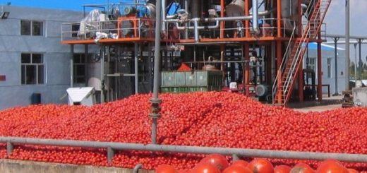 10-tunisie_les_agriculteurs.jpg