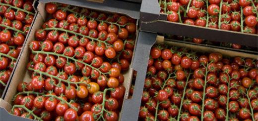 3-tomate_maroc.jpg
