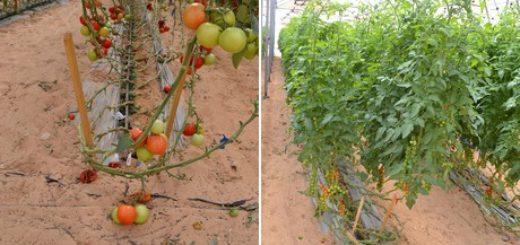 agriculture_israel.jpg