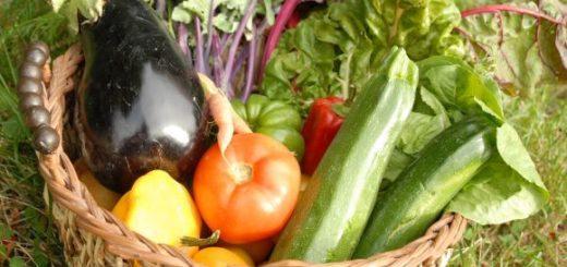 agriculture_biologique.jpg