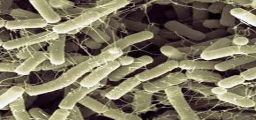 bacillus_amyloliquefaciens.jpg