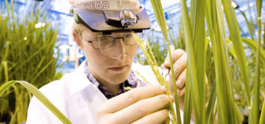 bayer-cropscience.jpg