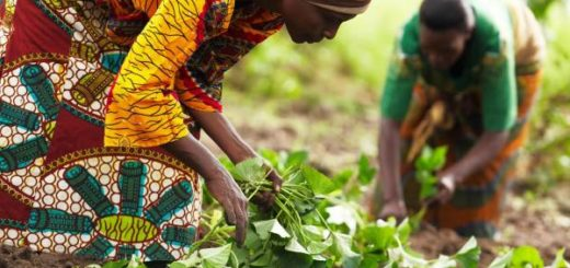 agriculture_afrique.jpg