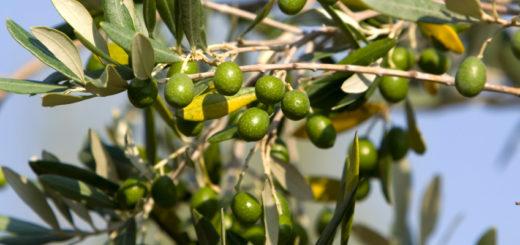 59-olivier.jpg
