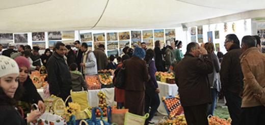 festival-des-agrumes-hammamet-2014.jpg