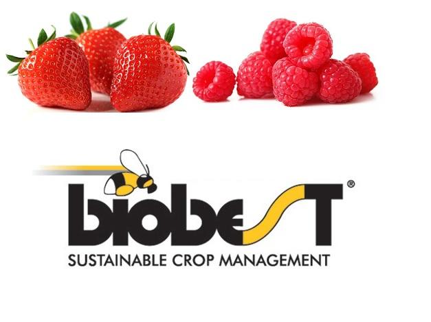 fraise_framboise_biobest.jpg