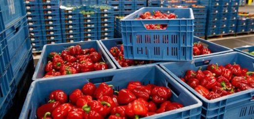 importation_fruits_et_legumes.jpg