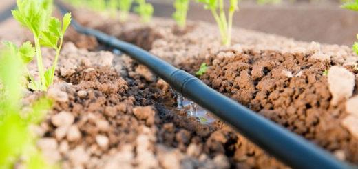 irrigation_goutte_a_goutte.jpg