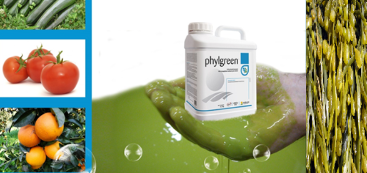 phylgreen.png