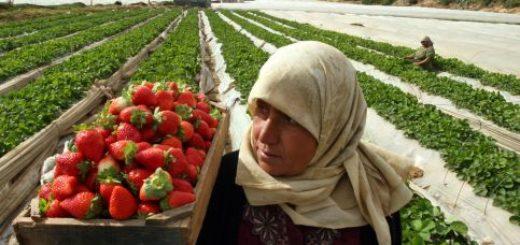 strawberry-gaza.jpg
