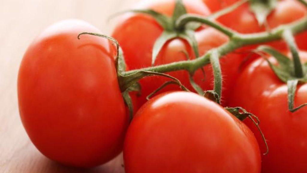 tomate_maroc_2.jpg