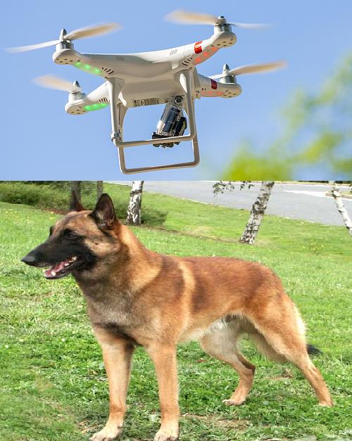 drone_et_chien.png