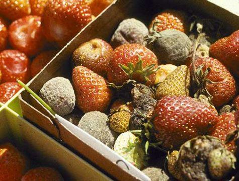 fruits-pourris.jpg