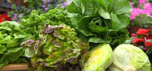 legumes-feuilles.jpg