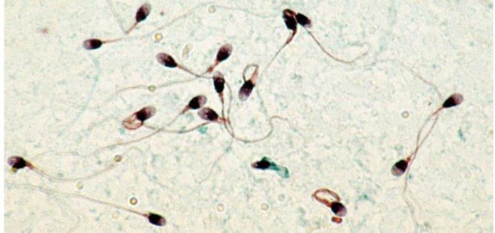 sperme_pesticides.jpg