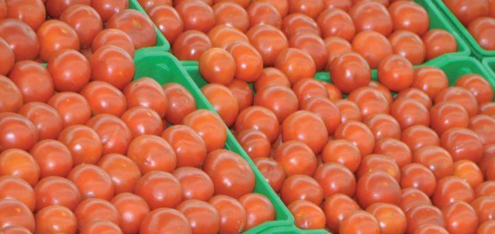 exportation-de-tomates.jpg