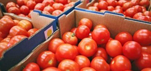 tomate_12.jpg