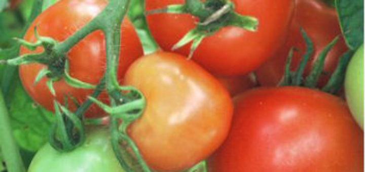 tomate10.08.jpg