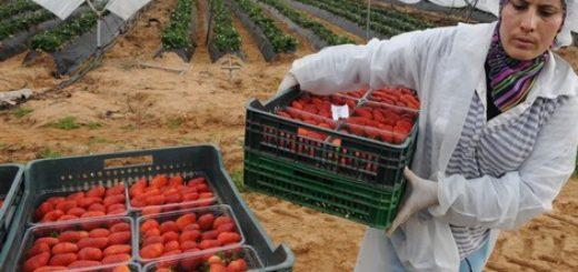 fraise-espane-maroc.jpg