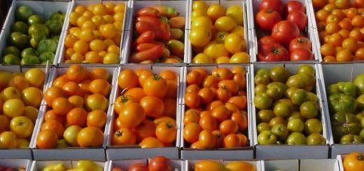 tomates-varietes.jpg