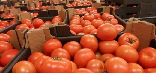 exportation_tomate.jpg