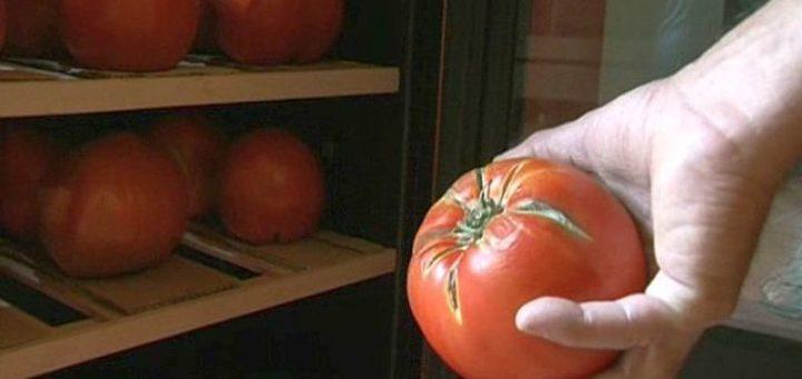tomate_france.jpg