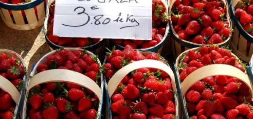 fraise_gaza.jpg