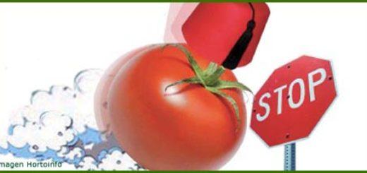 tomate-stop-2.jpg