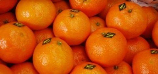 clementine_maroc.jpg