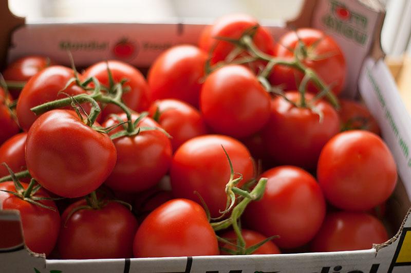 tomate_maroc.jpg