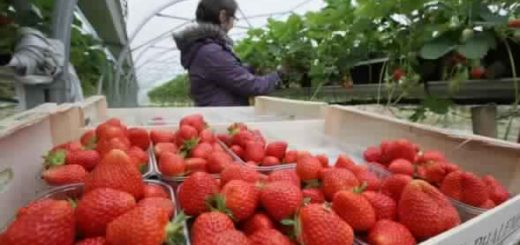 fraise.jpg