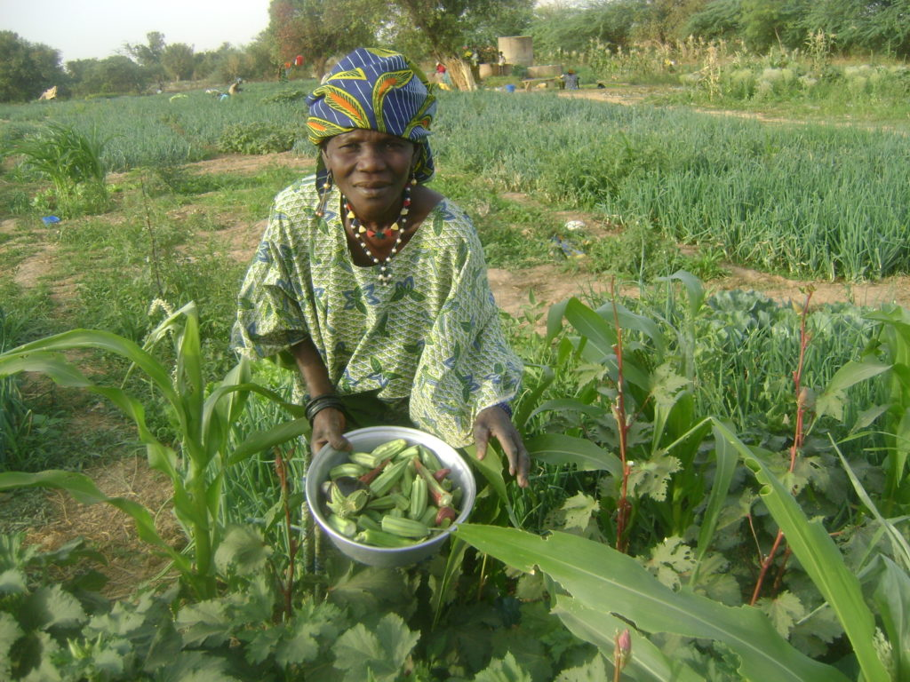 pesticides_senegal.jpg