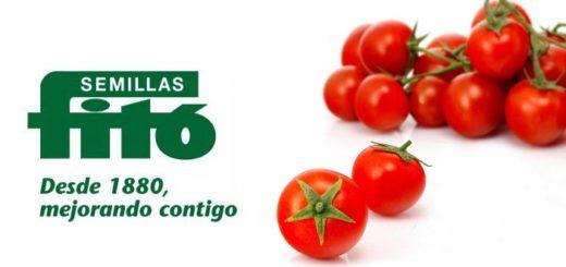 semillas_phyto_1.jpg