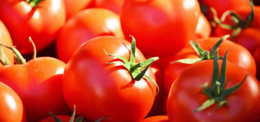 tomate_1.jpg