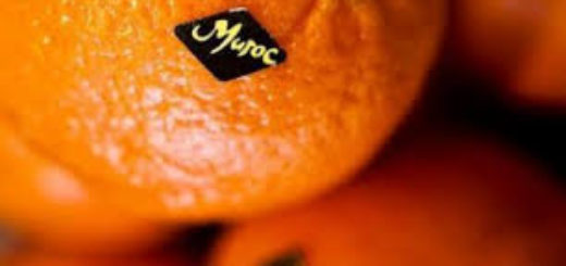 agrumes_maroc.jpg