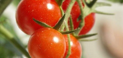 tomatecerise.jpg