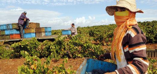 agriculture_maroc.jpg