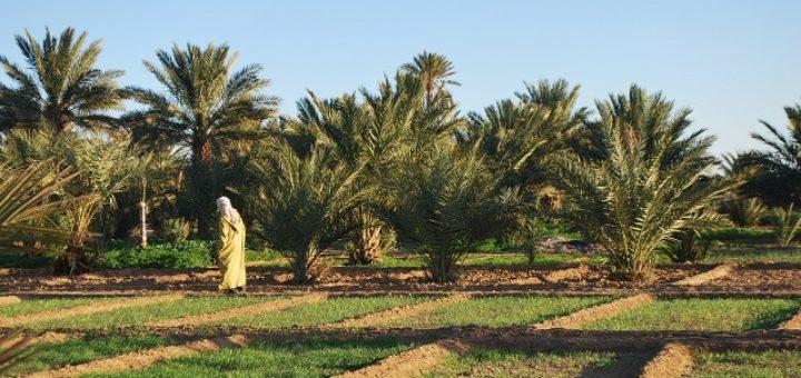 oasis-au-maroc.jpg