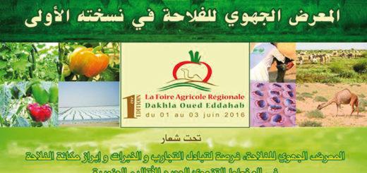 dakhla-foire-regionale-agricole-.jpg