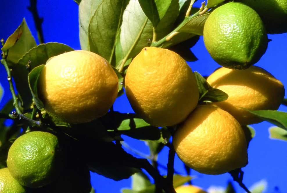 citron.jpg